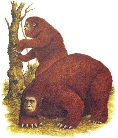 Slothmen pair