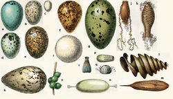 Variety of eggs