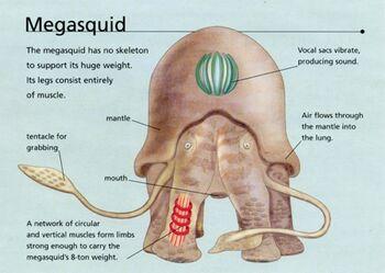 Megasquid2