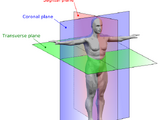 Speculative biomechanics