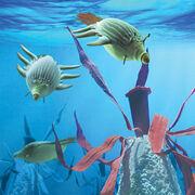 Reef gliders red algae