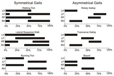 Gait graphs
