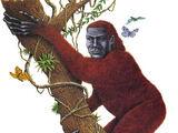Tropical Forest-Dweller