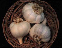 Organic-garlic-fire-spray-for-gardens-01