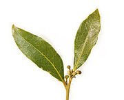 -Bay leaf pair443