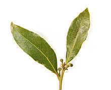 File:-Bay leaf pair443.jpg