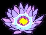Pooling Lotus