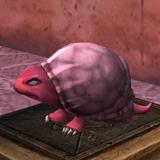 Shell Critter Mini