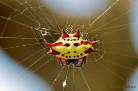 File:A kite spider 4.jpg