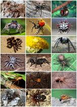 Spiders Diversity