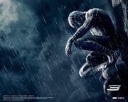 Black-spider-man-rain