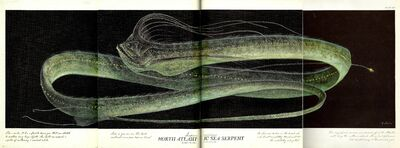 Atlantic Sea Serpent