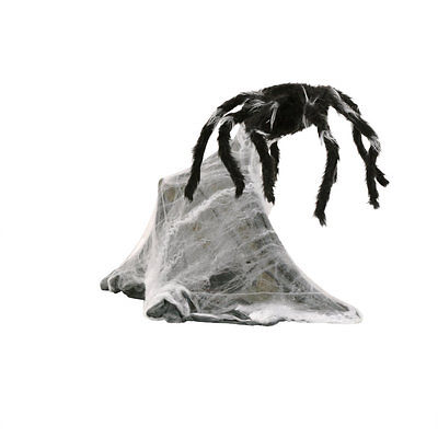 File:NEW-Animated-Halloween-Moving-Audible-Jumping-Spider-