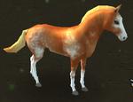 Sabino Horse
