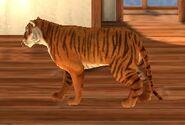 Tigerwalk