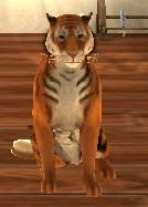Tigerroom