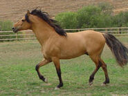 The-real-Spirit-spirit-stallion-of-the-cimarron-16966808-244-183