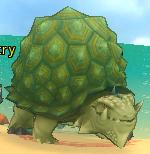 Shaker turtle