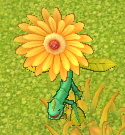 Daisybug