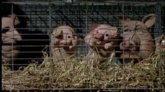 Spitting Image - Meat