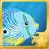 Foureye Butterflyfish§Headericon
