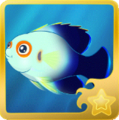 Pearlscale Pygmy Angelfish§Headericon