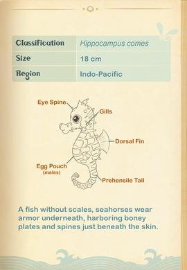 Tiger-tail Seahorse§Aquapedia2