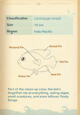 Herald's Angelfish§Aquapedia2