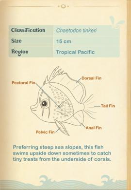 Hawaiian Butterflyfish§Aquapedia2