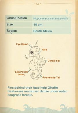 Giraffe Seahorse§Aquapedia2