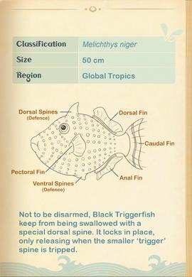 Black Triggerfish§Aquapedia2