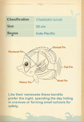 Racoon Butterflyfish§Aquapedia2