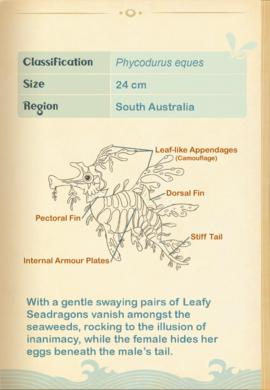 Leafy Seadragon§Aquapedia2