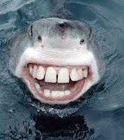 Friendly shark 2
