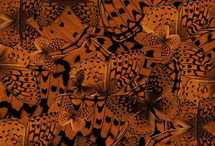 File:Butterfly Header.jpg