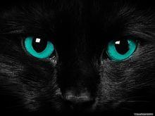 Scary cat eyes-1600x1200