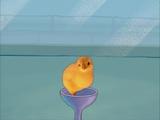 Roger (chick)