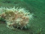 Case of the Sponge Bob 129