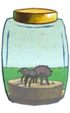 Sandy's Tarantula