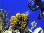 Case of the Sponge Bob 025