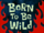 Born to Be Wild/gallery