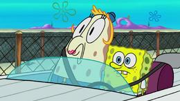 Eyelashless Sponge