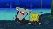 Sharks vs. Pods 035