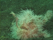 Case of the Sponge Bob 124