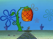 Home Sweet Pineapple 194