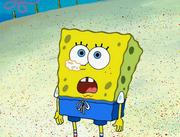 SpongeGuard on Duty 049