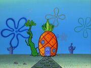 Home Sweet Pineapple Gallery (48)