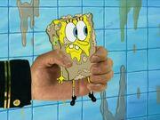 Model Sponge 169