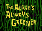 Чужие водоросли всегда зеленее