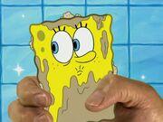 Model Sponge 172